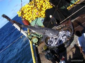 whalesharkfishing